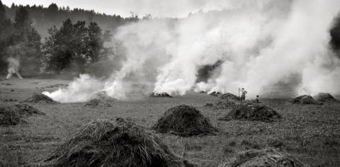 burning fields near český ráj, czech repulic.  photographed aug 2005. med format b+w film.